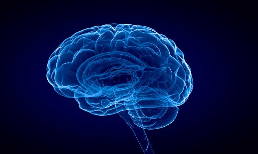 Le cerveau participe au développement du cancer de la prostate